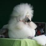 hvad skal man have med på hundeudstilling