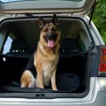 hunde i varme biler