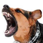 Gøende hund