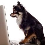 hund på nettet