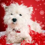 Fotokonkurrence med julehunde
