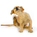 Lopper er irriterende for både hund og hundeejer