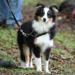 valg af hundepension