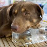 Lav selv is til hunden