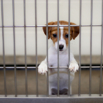 Hund der venter på sin ejer