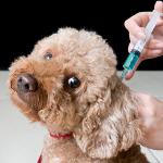ISO-certificerede dyrlæger