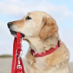 Hundeejere dyrker mere motion