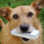 Hundeskove på mobilen