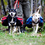 Vandreture med slædehunde med oppakning