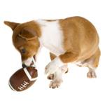 Hund spiller amerikansk fodbold