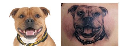 tatoveret hundeportræt