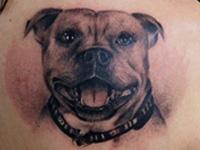 hundeportræt tatovering