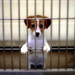 foredrag om hundehandlere og hvalpefabrikker